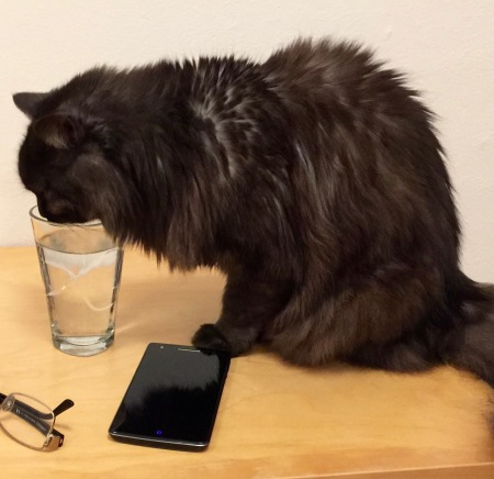 The kitty thought my water tasted best!